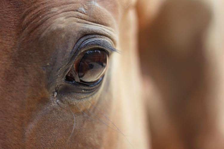 verletzung pferd auslauf haftung